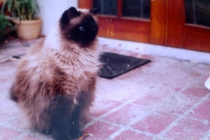 Fred P Fluff, Cat Extrodinaire