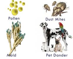 HEPA-vacuum-allergens